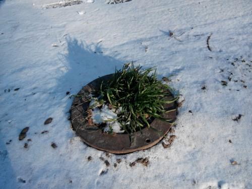 3 декабря - первый снег